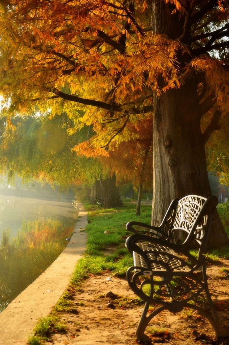25 Best Ideas About Park Benches On Pinterest Outdoor