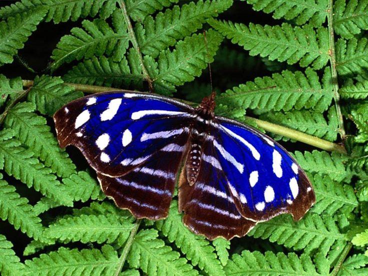 Butterflies   Beautiful Butterflies - Butterflies Wallpaper (9481888) - Fanpop ...