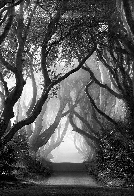 Get lost with me.                                                                                                                       www.taramtominaga.com                                                                                                                  Tara Tominaga | Photography | Art | Black & White