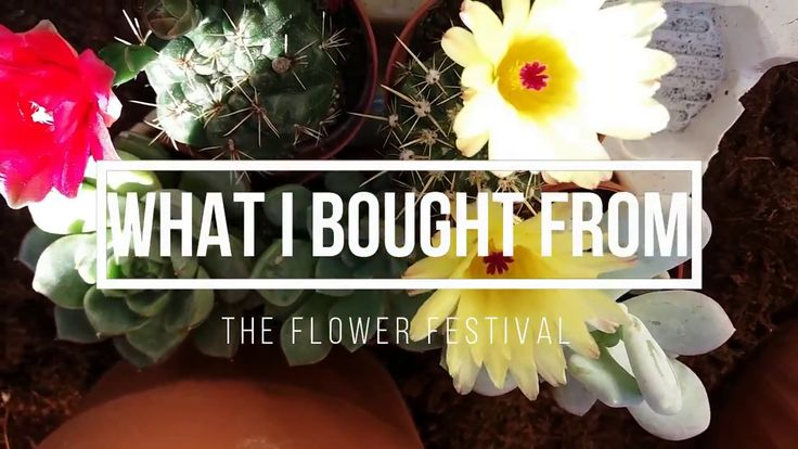 What i bought from the flower festival #flowerfastival #planthaul #succulents #cactus #cacti