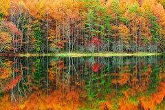 まるで絵画の世界に入り込んだような世界が味わえる池が長野県茅野市の御射鹿池 東山魁夷の名画緑響くのモチーフとしても有名です まるで鏡の様な水面へ反射する木々 神秘的な雰囲気がありますね tags[長野県]