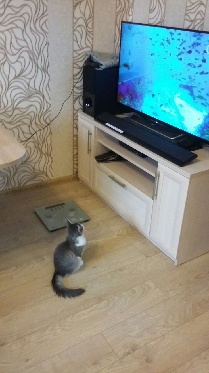Looking at the fishes