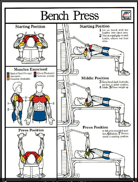 17 Best Images About Bench Press On Pinterest