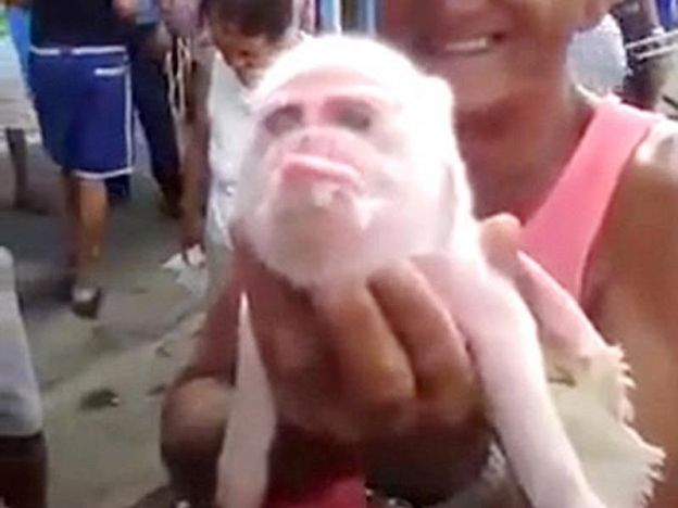 Gempar! Gambar anak babi berwajah monyet ditemui   Gempar! Gambar anak babi berwajah monyet ditemui    Penduduk di bandar Ciego de Avila gempar dengan kelahiran seekor anak babi yang memiliki muka seakan monyet.  Menurut laporan Dailymail anak babi tersebut memiliki rahang beruk yang sama dengan beberapa kes kelahiran dan penemuan serupa di China pada 2008.  Gempar! Gambar anak babi berwajah monyet ditemui  Haiwan tersebut memiliki hidung yang lebih pendek dan dahi berlekuk menyerupai…