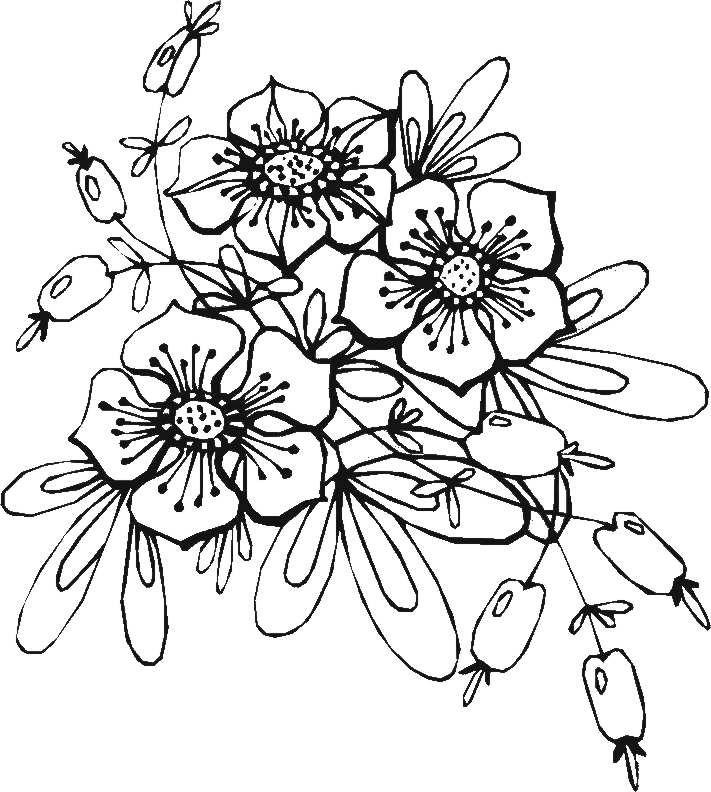 Blumenmotive Zum Ausmalen   Ausmalen, Ausmalbilder ...
