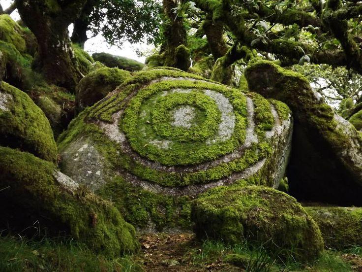 Source:trembling-colors.tumblr Wistmans Wood, Dartmoor, UK