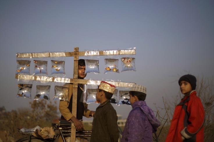 Vendedor de peces en las afueras de Islamabad, Pakistan