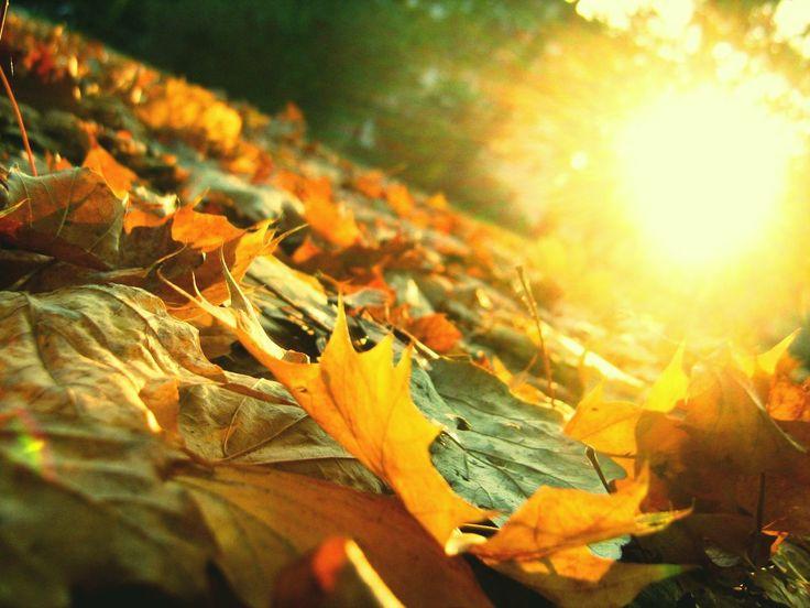 ...Entretenernos aquí con la esperanza.El júbilo del día que vendrá os germina en los ojos como luz reciente.Pero ese día que vendrá no ha de venir: es éste...