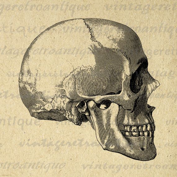 Skull Side View Printable Digital Download Graphic Image Artwork Jpg Png Eps 18x18 HQ 300dpi No.2251 @ vintageretroantique.etsy.com #DigitalArt #Printable #Art #VintageRetroAntique #Digital #Clipart #Download
