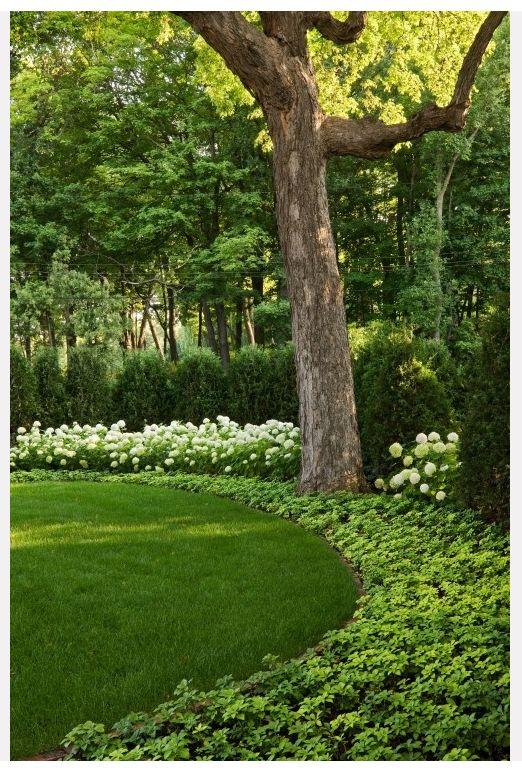 Green garden corner of property