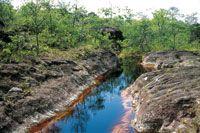 Un bosque achaparrado en la cima de Chiribiquete drena sus aguas lluvias hacia un pequeño afluente encajado en los afloramientos rocosos y l...
