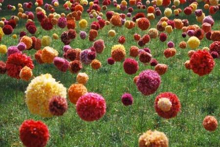 Yarn bomb pom poms