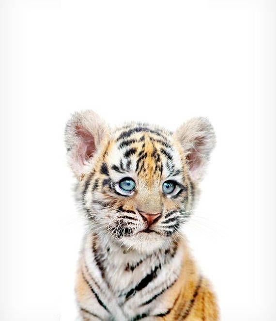 Child tiger print, Safari animal prints, PRINTABLE nursery artwork, Safari nursery decor, Tiger cub, Safari animals, Nursery wall artwork, Animals