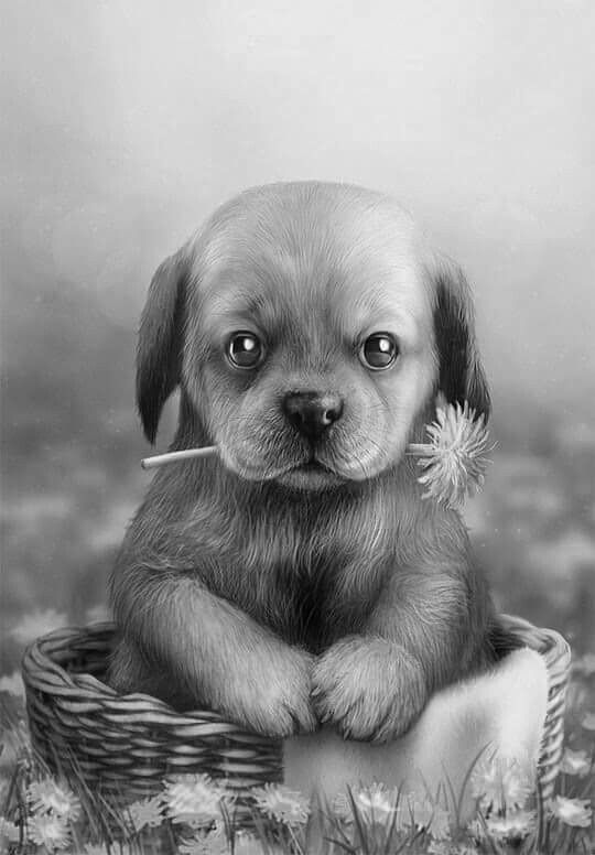 Pin by Irene Mcdevitt on colouring pages Puppy art, Cute