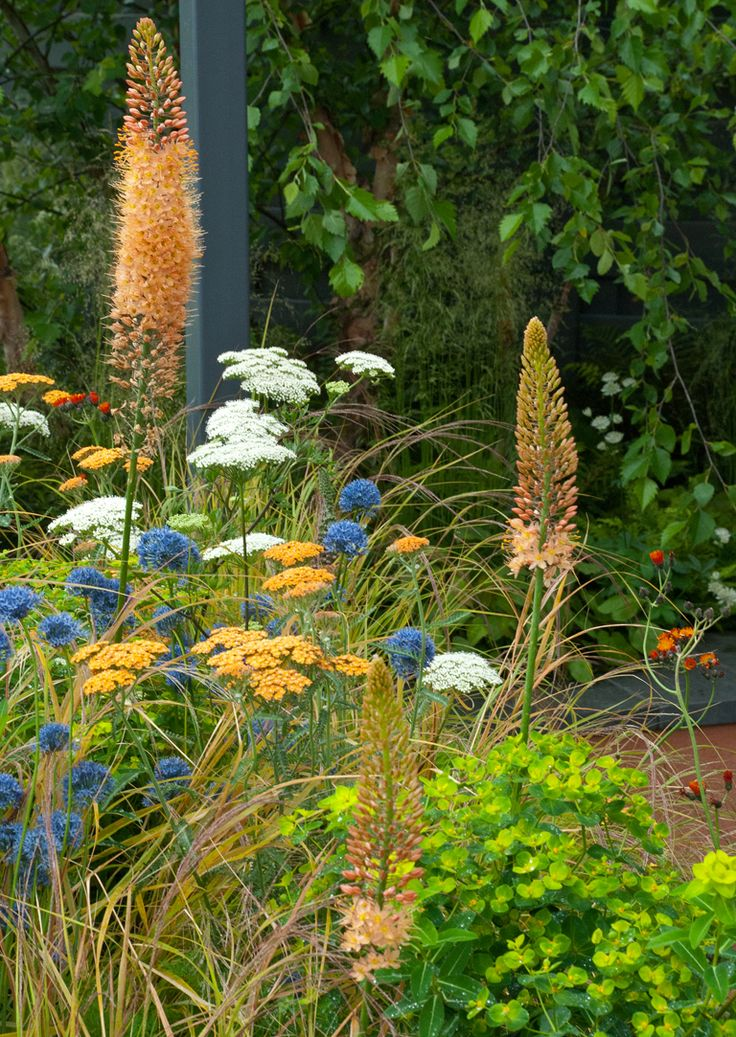 The Landform garden was designed by Catherine MacDonald and sponsored and built by Landform Consultants. It won Gold and Best Summer Garden and it wasn't difficult to see why. The planting in this garden – rich and warm and perfectly in tune with the steel pergola and grey boundary fences. http://blog.lisacoxdesigns.co.uk/tag/coastal-drift-garden-2012/