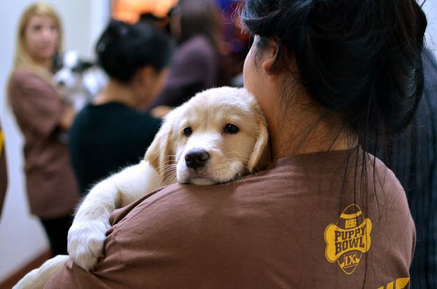 And everyone got to hold one. | The 58 Cutest Things Found Behind The Scenes At The PuppyBowl