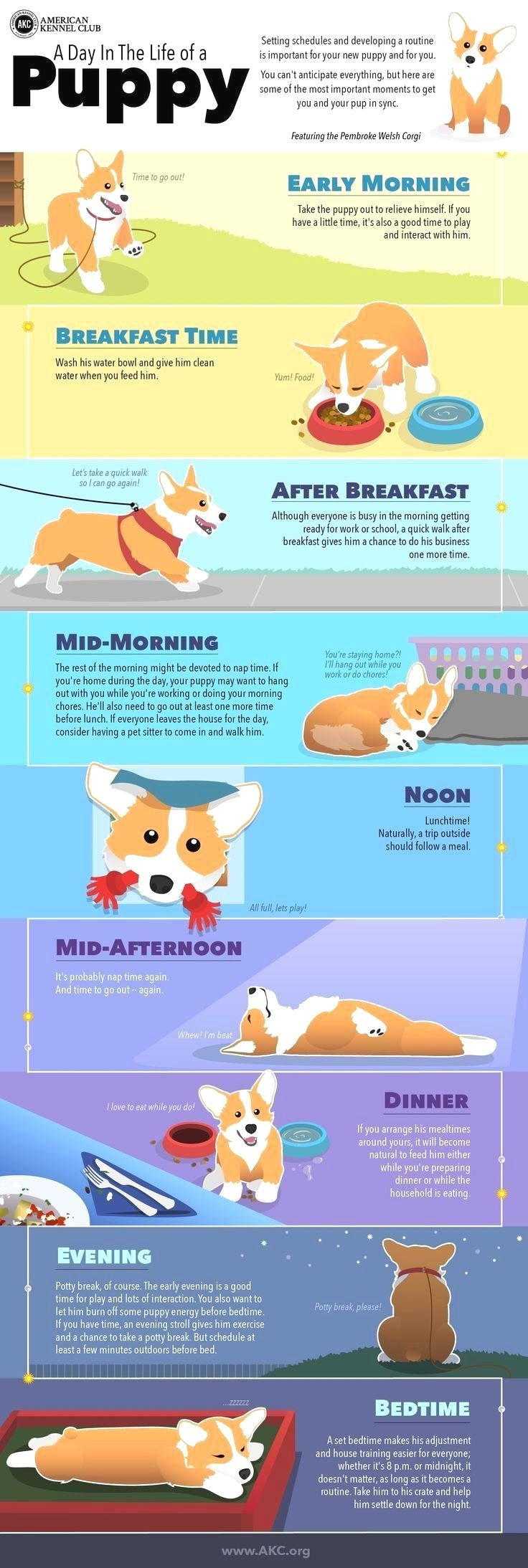 best communication et éducation avec les chats et les chiens