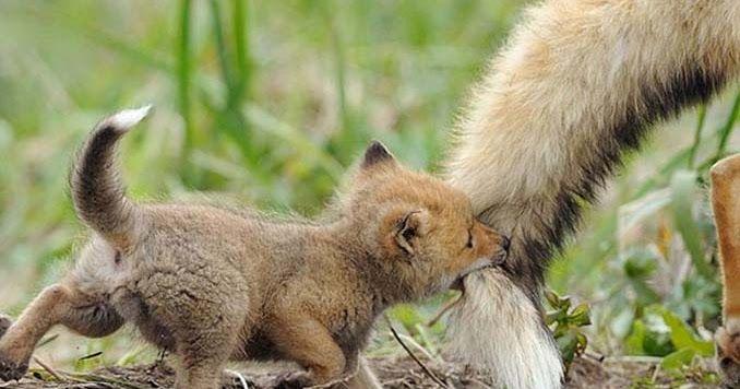 20 φωτογραφίες μωρών ζώων που θα σας κάνουν να λιώσετε
