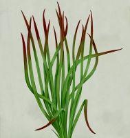 · botanical : marta zafra