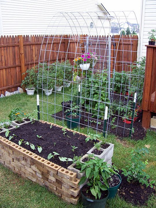 Cinder block raised bed  Cattle panel trellis.    *use trellis to grow beans between beds
