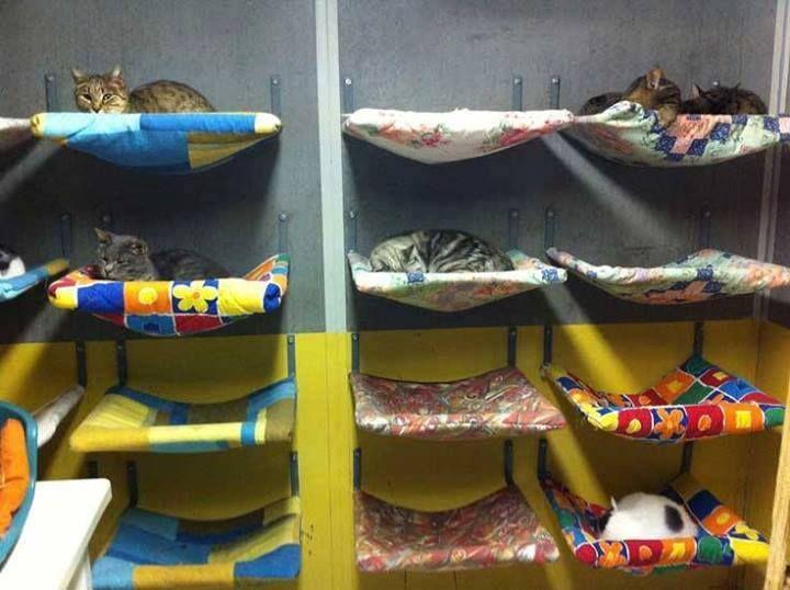 Cama para gato na parede feita com suporte e capa de almofada. https://www.facebook.com/photo.php?fbid=253507028159196