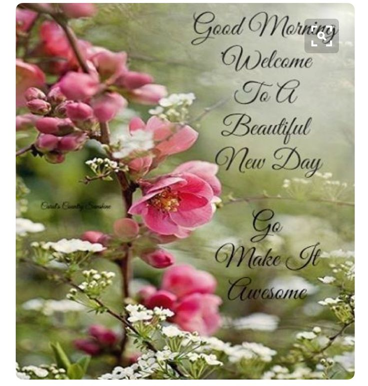 Pinterest Beautiful Quotes: 17 Best Good Morning Beautiful Quotes On Pinterest