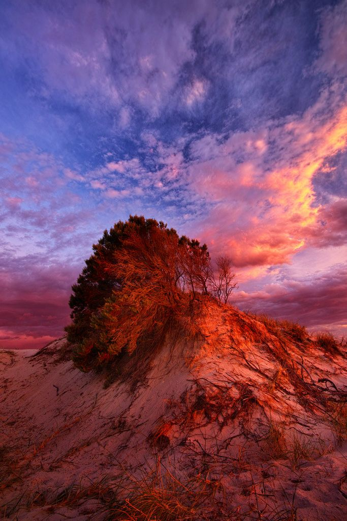 ~~Tennyson Tree   Tennyson Dunes in Adelaide, South Australia   by Edmund Khoo~~