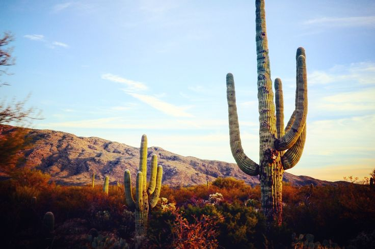 Wondering what to do in Tucson Arizona? Surrounded by mountains and desert, it's is a small city with great hiking, restaurants, art galleries, and more.