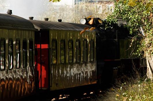 Danbo fährt mit dem Molli  #Danbo #Zug #Kühlungsborn #Ostsee #Molli