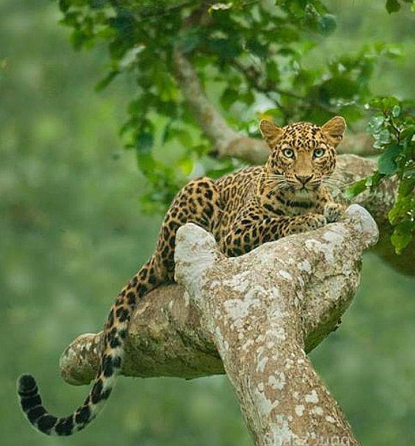 Belgique | beautiful-wildlife:   In natures lapby...