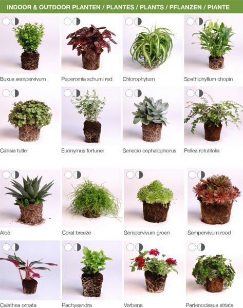 Ideal Find this Pin and more on Garten