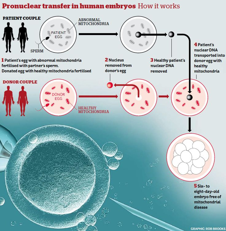 Pronuclear transfer in human embryos How it Works