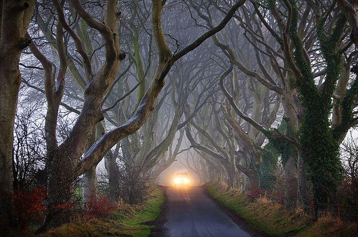 bukovaya-alleya-v-Irlandii.jpg (1200×796)