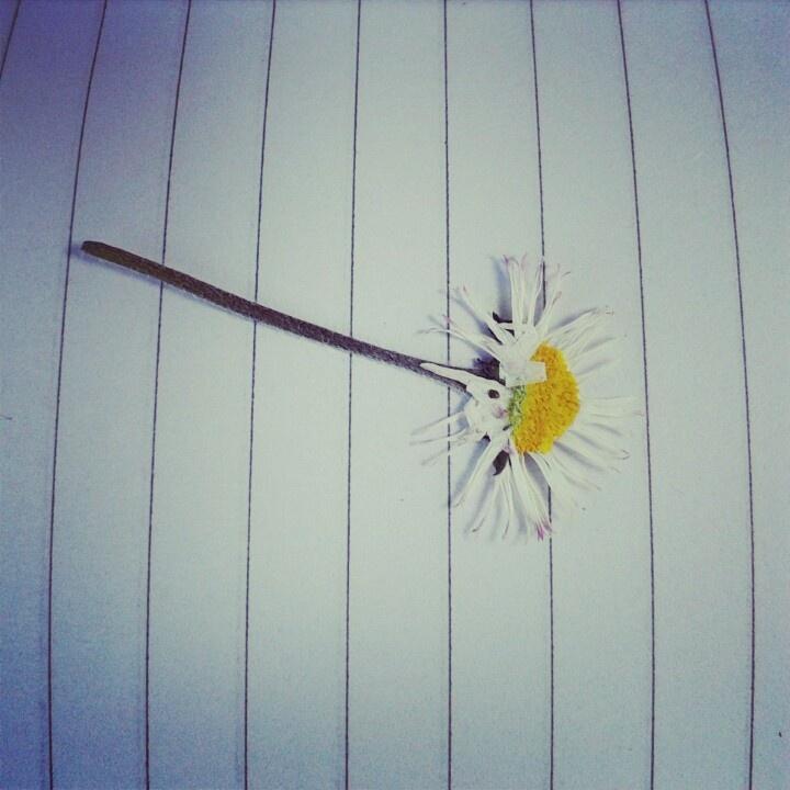Flower Margherita