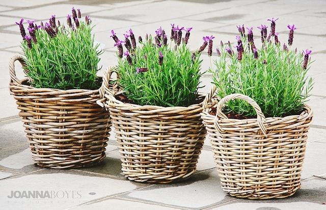lavender baskets <3