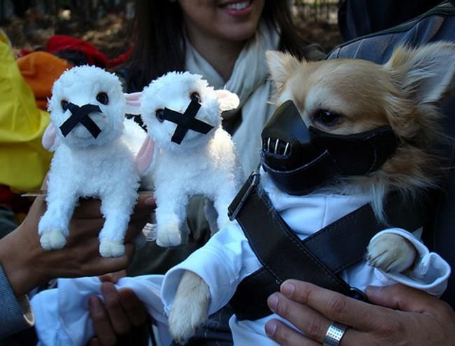 71 best Pet Costumes images on Pinterest
