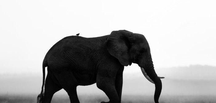 Botswana bans elephant-back rides