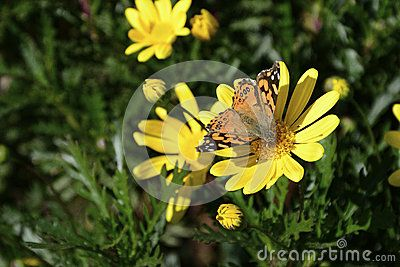Butterfly on a yellow flower in the garden