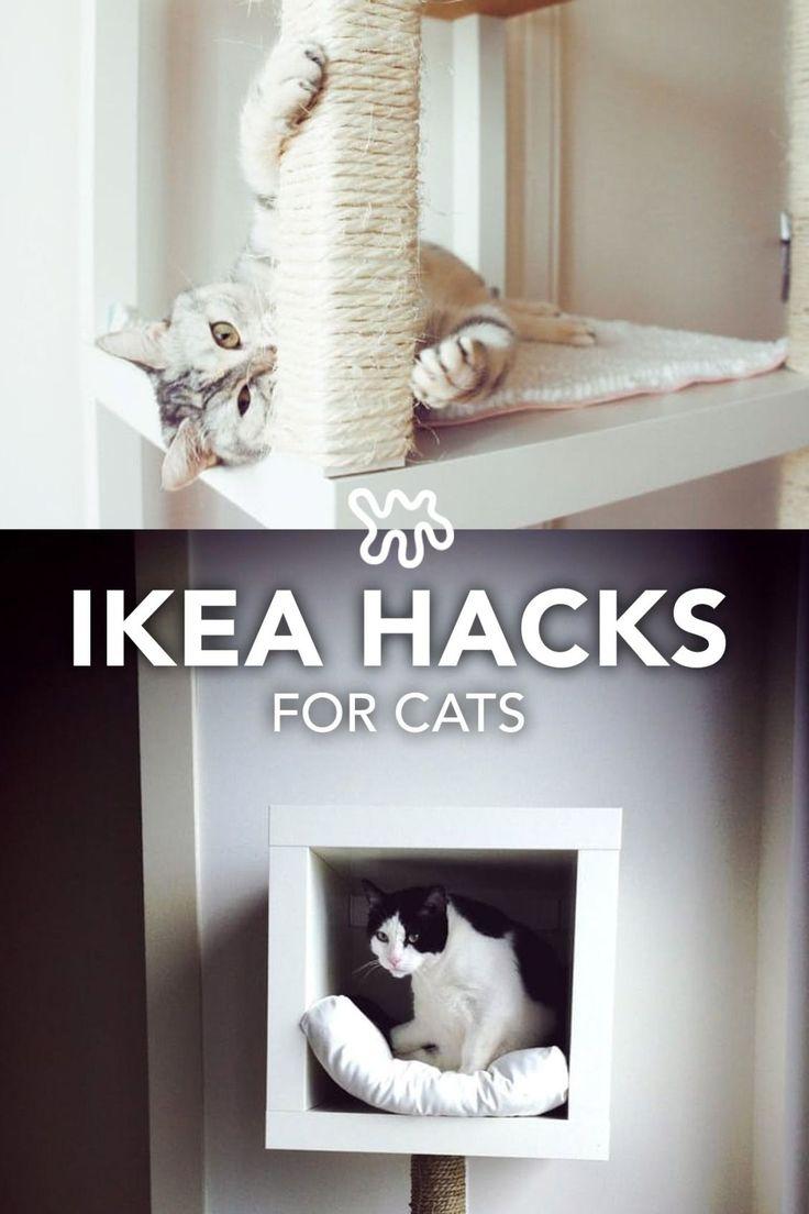 2442 besten Cat Litter Bilder auf Pinterest | Katzentoiletten ...