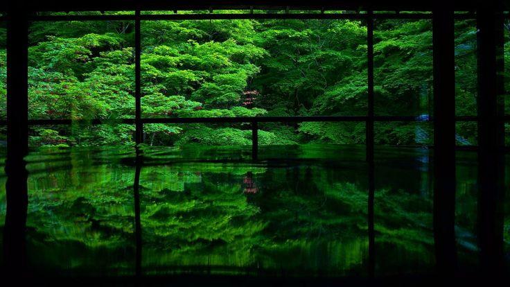 幽寂閑雅 #京都 #瑠璃光院 #新緑