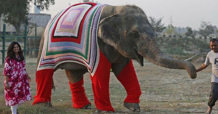 En Inde, des femmes tricotent d'énormes pulls pour les éléphants du refuge voisin et les aident à passer l'hiver. L'initiative d'une communauté repentie.