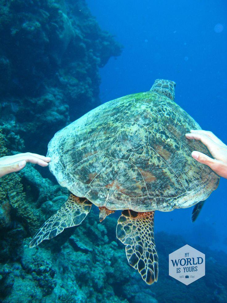 Duiken in het Great Barrier Reef | Ik had de zwevende schildpadden, de doorzichtige kwallen, de snelle haaien, de vrolijke clownsvisjes en, ergens verborgen tussen een muur van gekleurd koraal, een fotogenieke zeeanemoon niet willen missen.