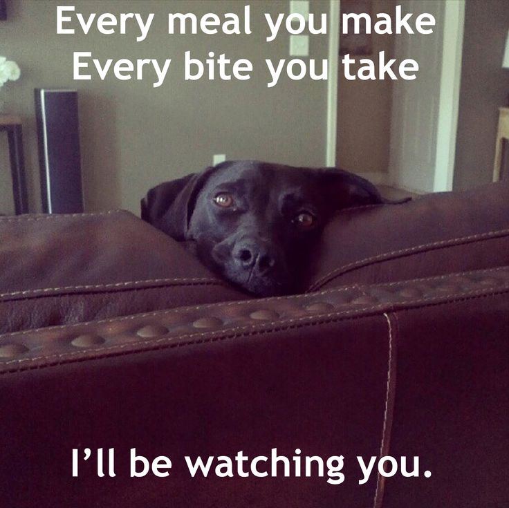 Every meal you make.... (I love how every meme that uses these lyrics also uses a black lab--as a black lab mommy, I can attest to the truth of this statement)