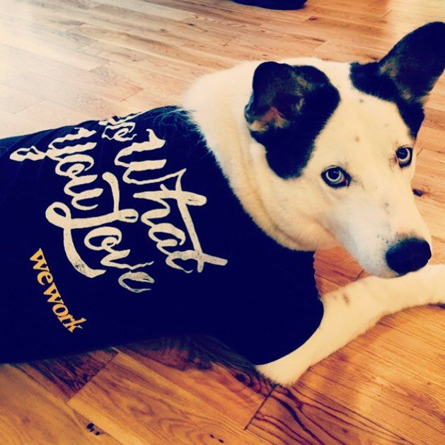 Weekend reminder at WeWork NoMad: Do What You Love. From @semevents #dogsofWeWork