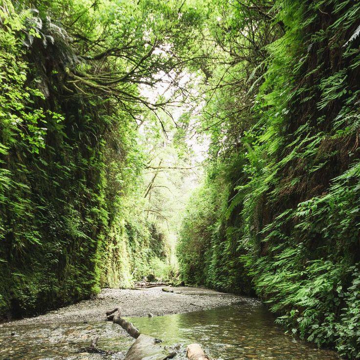 Fern Canyon is draped in bright green ferns. Photo © Igors Rusakovs/123rf.