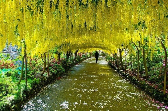 14 Magical Tree Tunnels You'll Want To Walk Through For The Rest Of Infinity