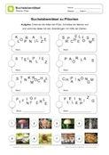 Auf diesem kostenlosen Arbeitsblatt sollen die Schüler in einem Buchstabensalat 8 Pilzarten finden und diese mit den richtigen Bildern verbinden.