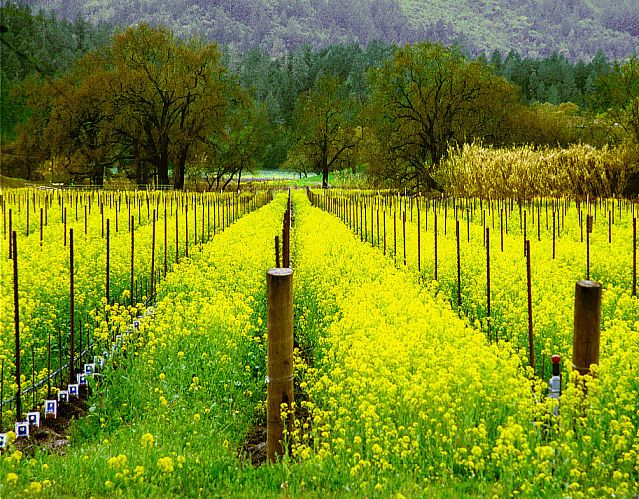 52 Best Napa Valley Scenery Images On Pinterest Vineyard