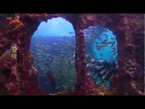 Visit #Aruba in the Caribbean