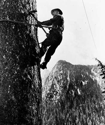 old logging photos around forks wa | job for the lumber jack. Manual labor. Gas chain saws weren't around ...